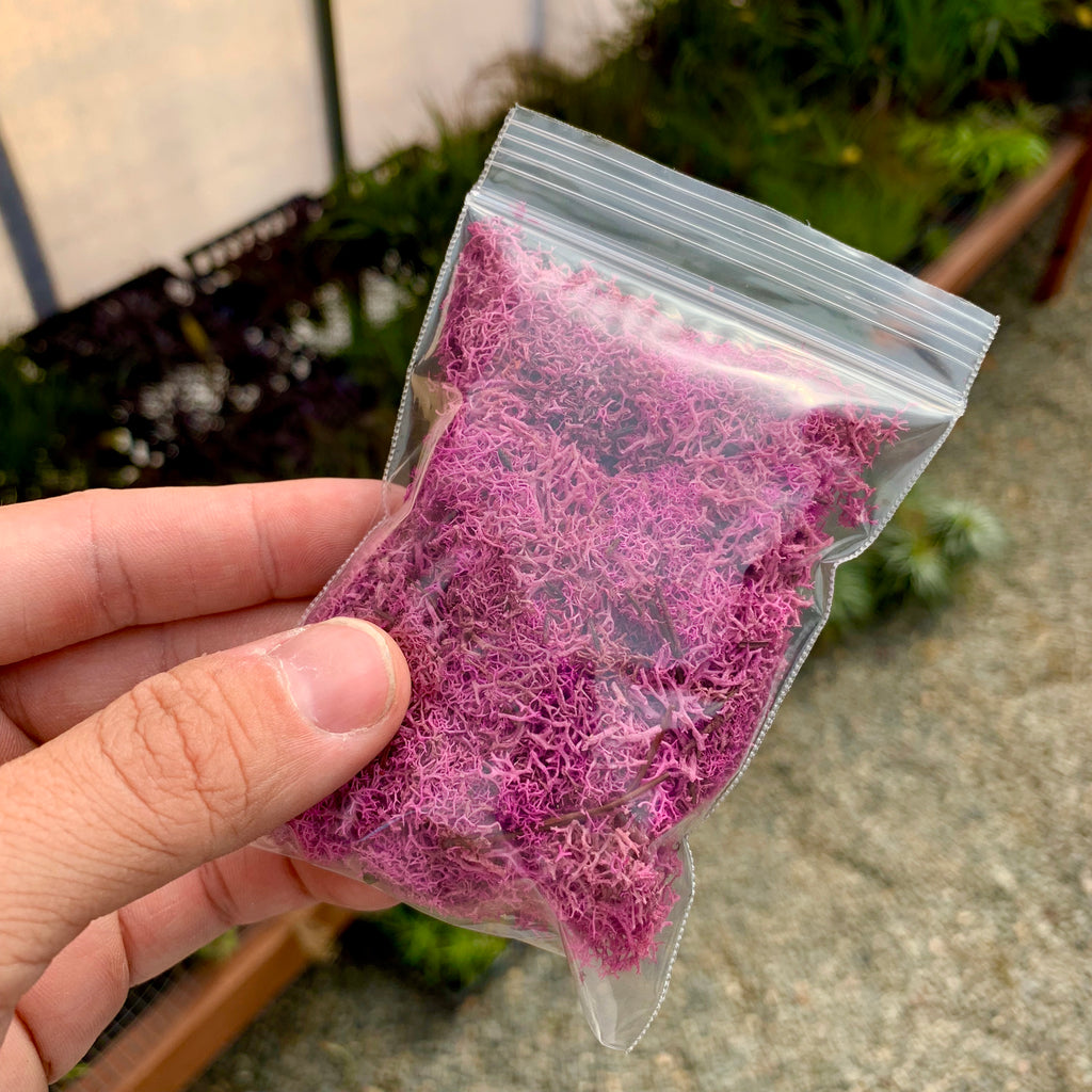 Preserved Accent Moss (Pink) - Air Plant Hub
