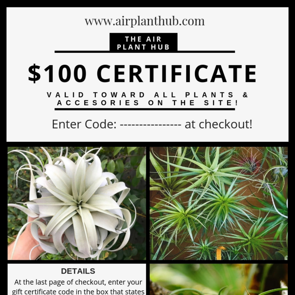 Air Plant Hub E-Gift Certificate <br> ($25, $50, $75, $100)