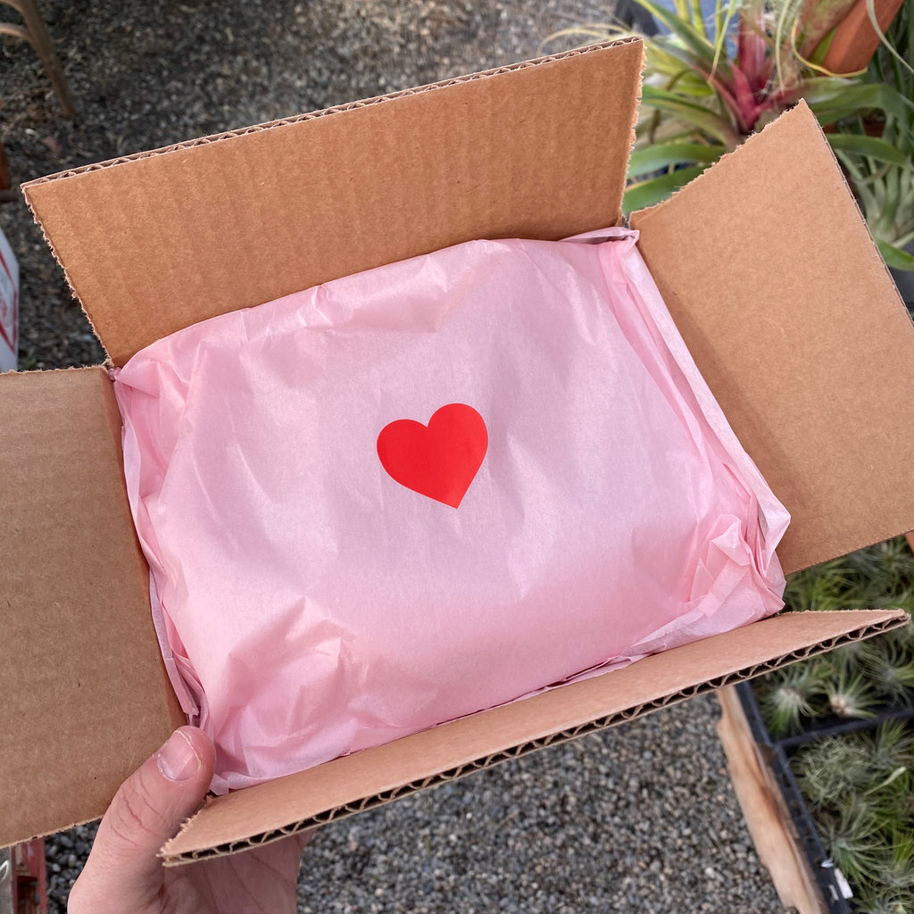 Valentines Day Air Plant Boxes <br> (Air Plants, Pink Gift Paper, Heart Sticker, and Gift Note)