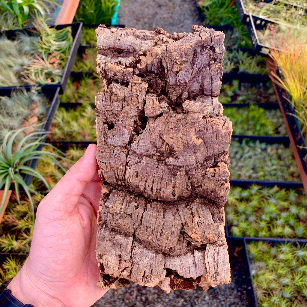 Virgin Cork Bark Slabs <br> Perfect For Mounting Tillandsia