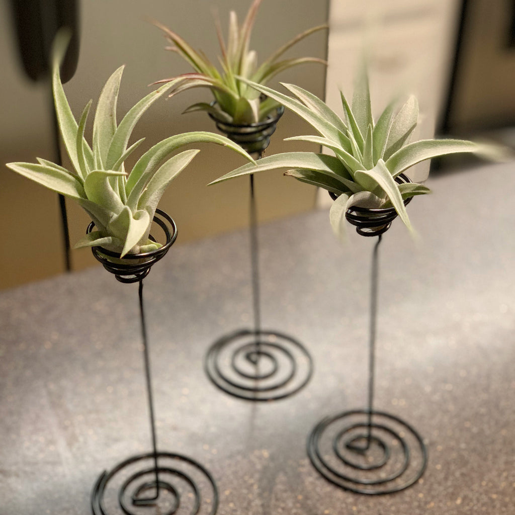 Heavy Gauge Wire Air Plant Stand <br> (Minimum Order 10)