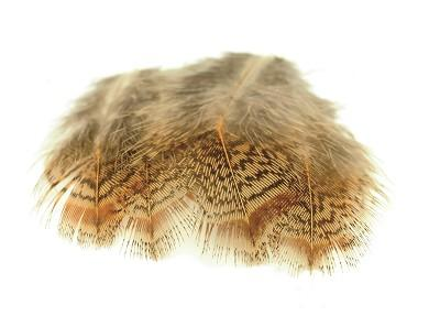 English Partridge Brown Back Feathers
