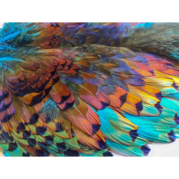 Chevron Hackles Pheasabou - Chinook Wind Outfitters