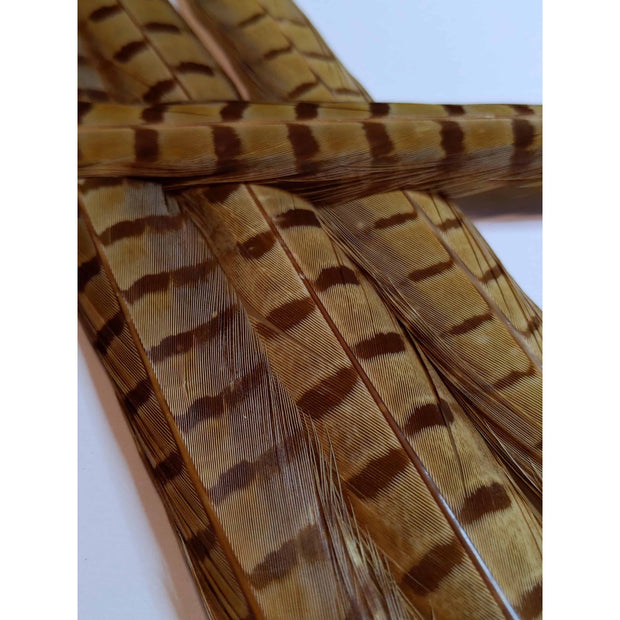 Chevron Dyed Pheasant Tail Feathers