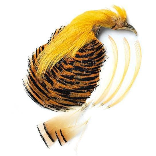 Veniard's Golden Pheasant Complete Head, 1st Quality