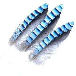 Blue Jay Wing Hackles