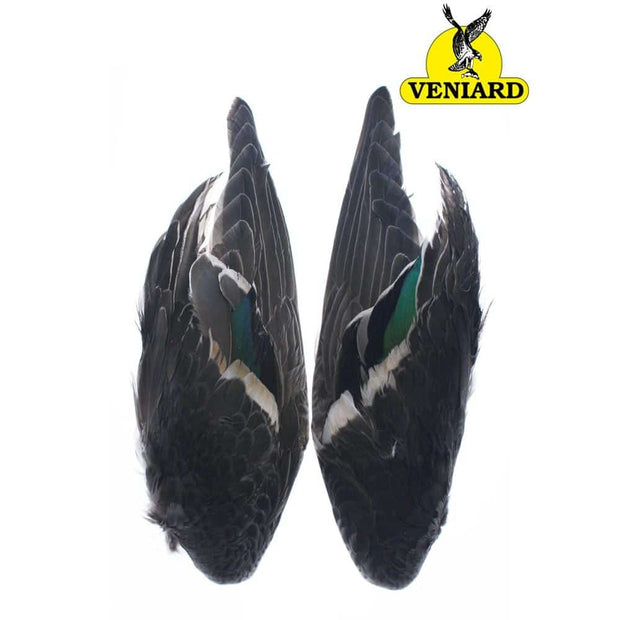 Teal Duck Wing Pair