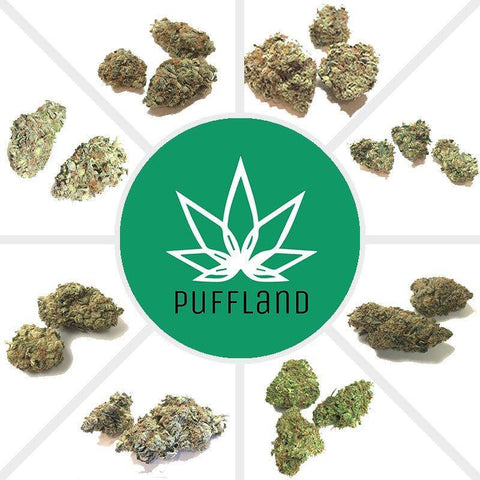 Flowers - Puffland Sample Pack: 1 Oz