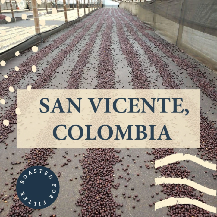 San Vicente, Colombia - Filter Roast