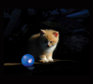 Petstages Twinkle Ball - Juguetes para Gatos