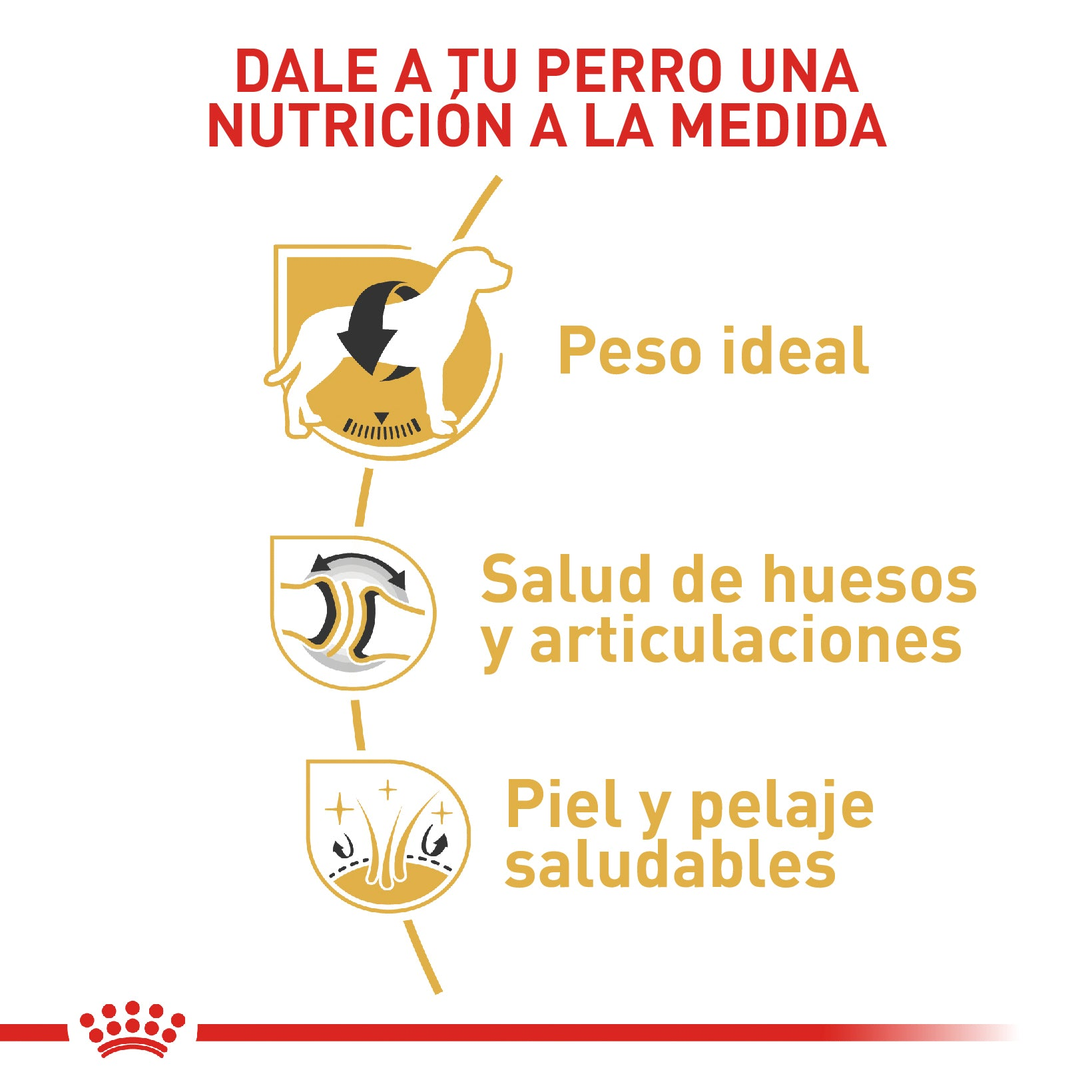 Royal Canin Labrador Retriever Adult - Alimento para Perros