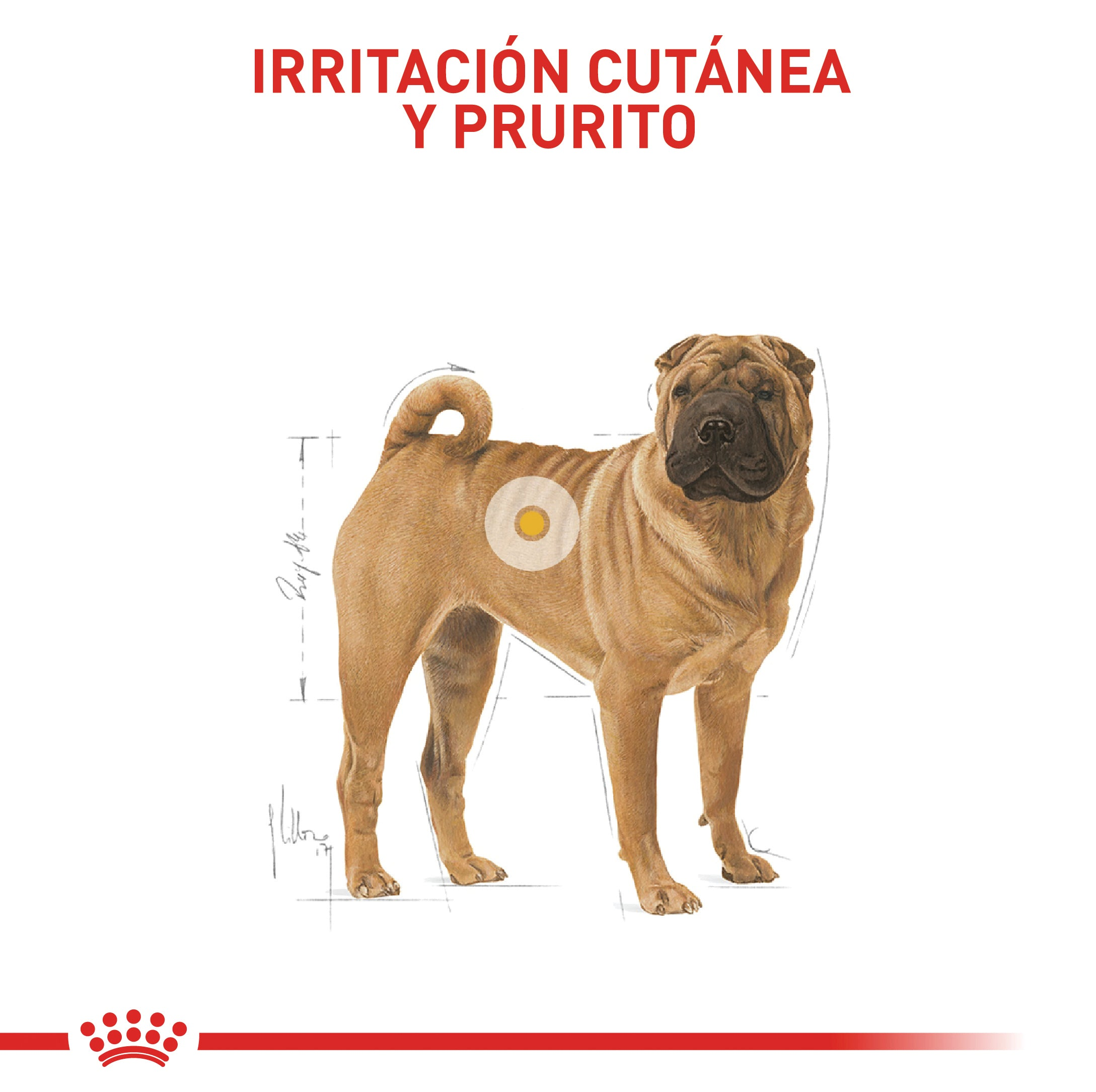 Royal Canin Medium Dermacomfort - Alimento para Perros