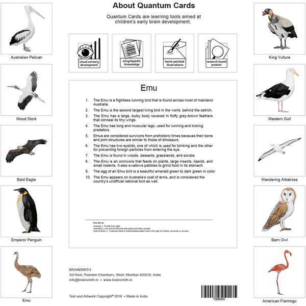 Birds - Quantum Cards  Set - Nick & Nishka