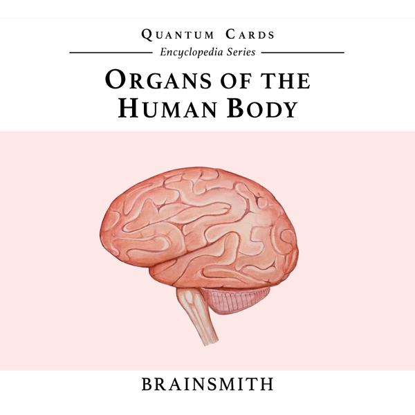 Picture of brain on quantum card set on human organs