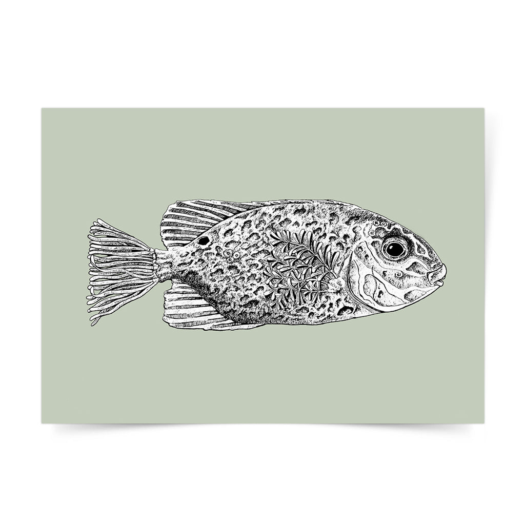 Rabbitfish Art Print by Angelo Delos Santos