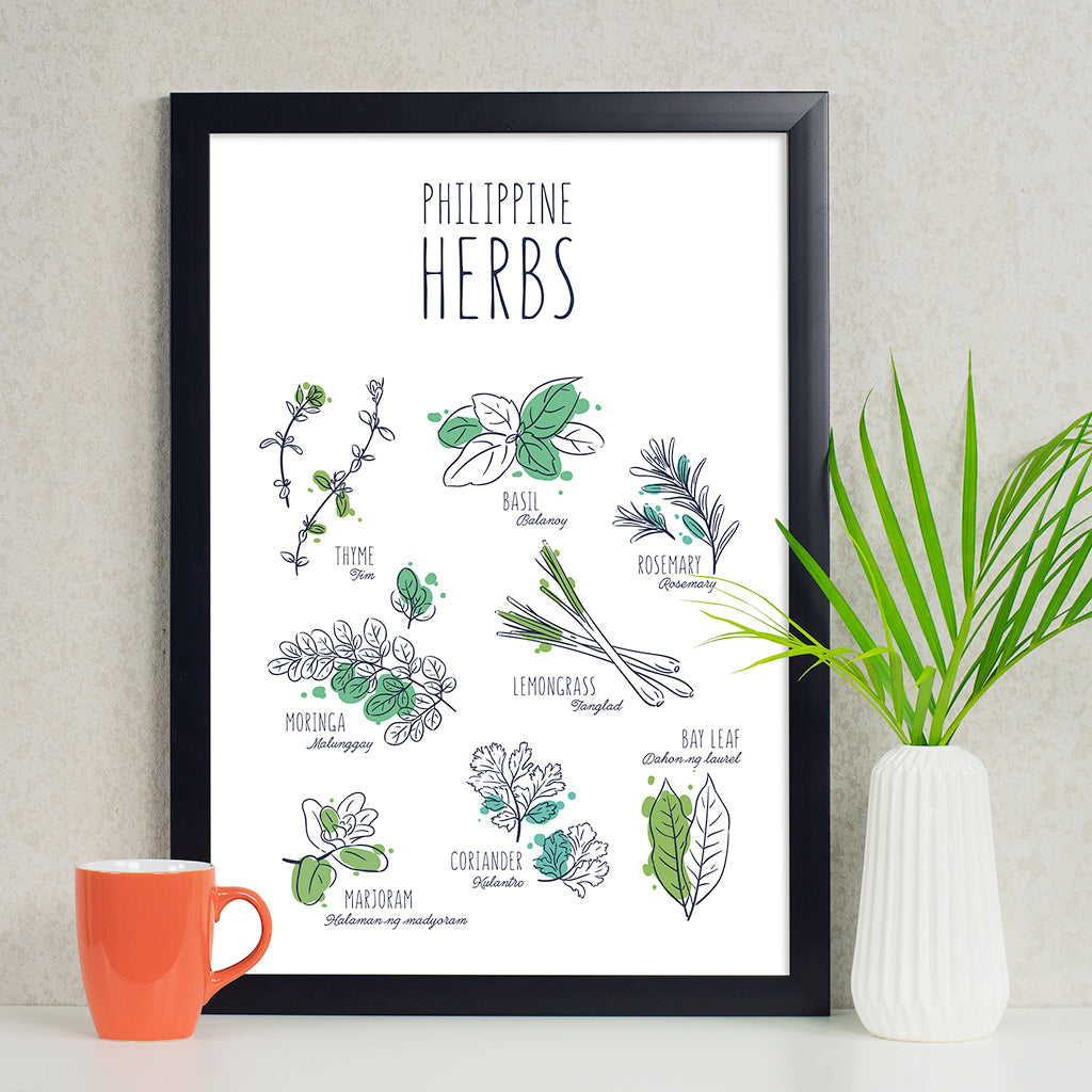illustrated art kitchen poster philippine herbs rosemary malunggay basil coriander thyme bay leaf