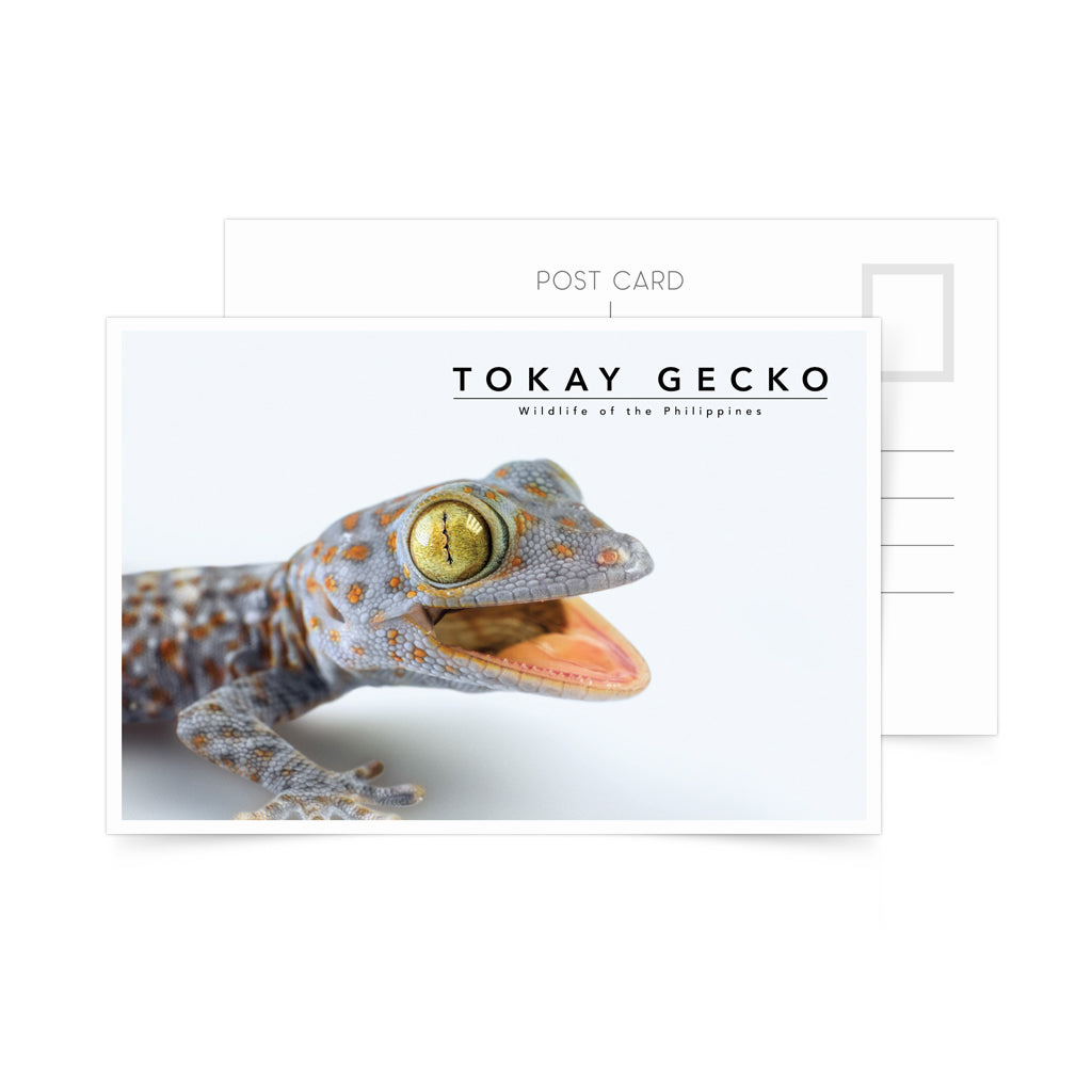 photo postcard philippine tokay gecko