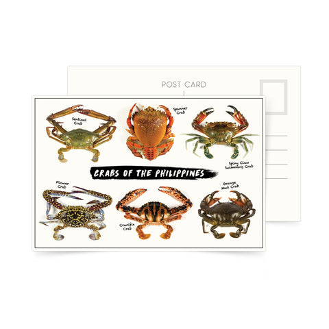 «Crabs of the Philippines» Postcard Philippine