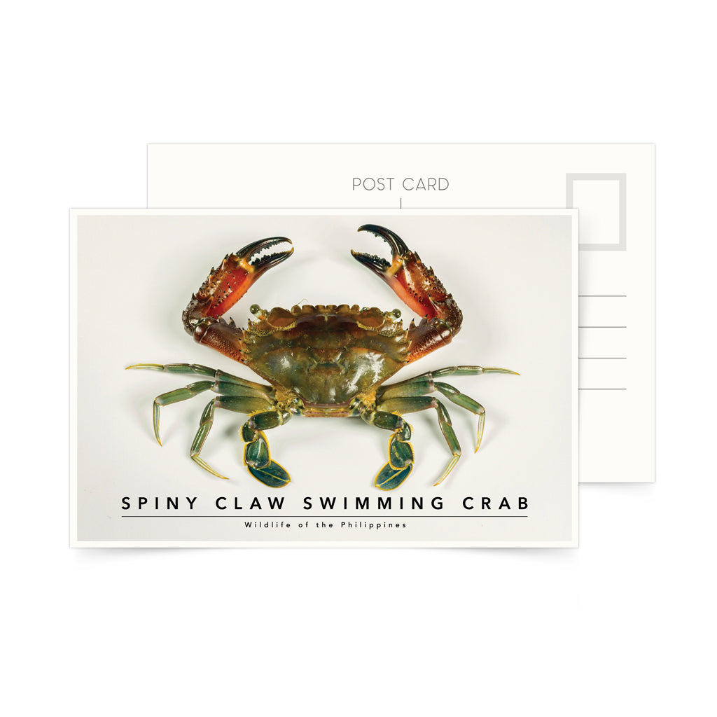 photo postcard philippine crab