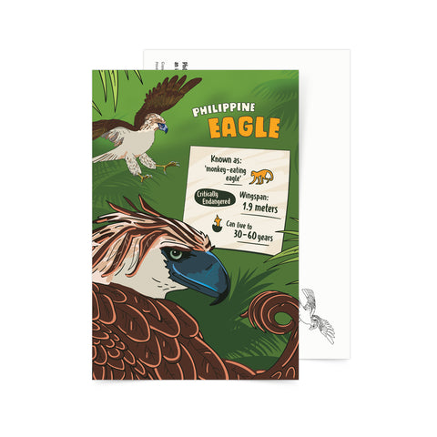Facts About Philippine Eagle Postcard  Philippine
