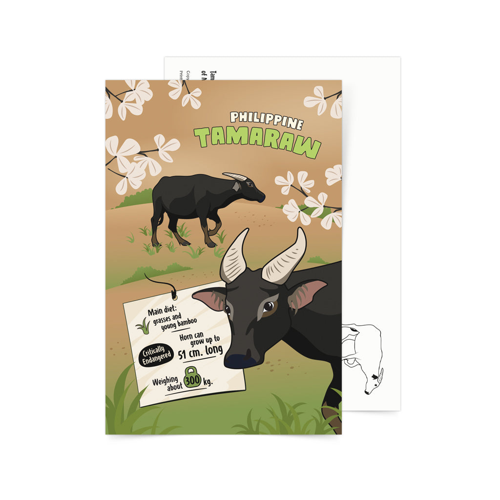 «Facts about Philippine Tamaraw» Postcard Philippines gift