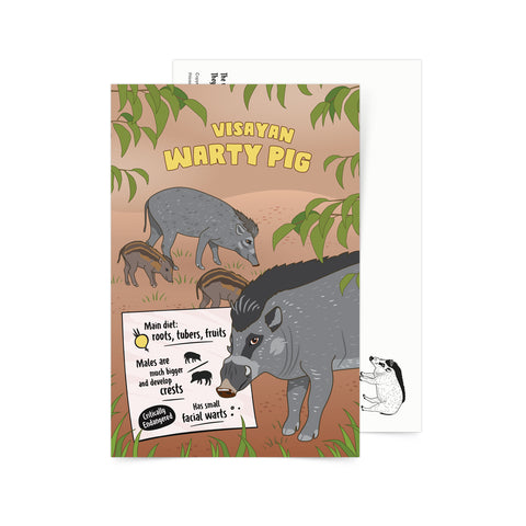 «Facts about Visayan Warty Pig» Postcard Philippine