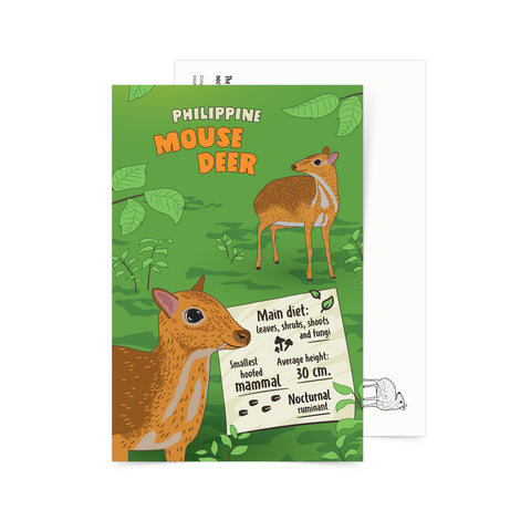 «Facts about Philippine Mouse Deer» Postcard Philippine