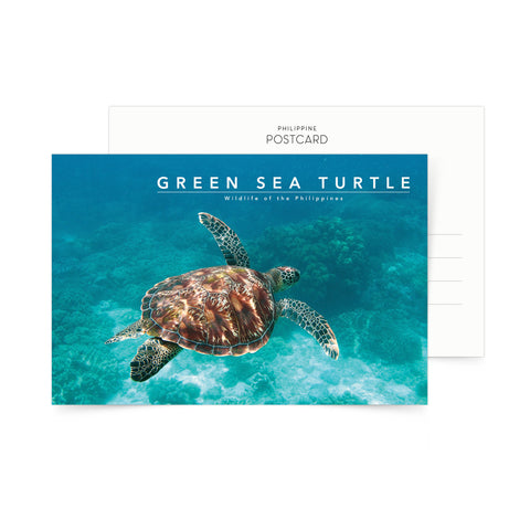 Green Sea Turtle Postcard  Philippine
