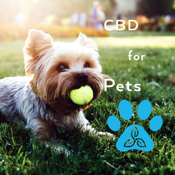 CBD and Dogs