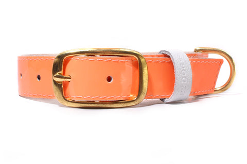 HEY DOG Co. NEW ARRIVAL | ORANgEON Collar