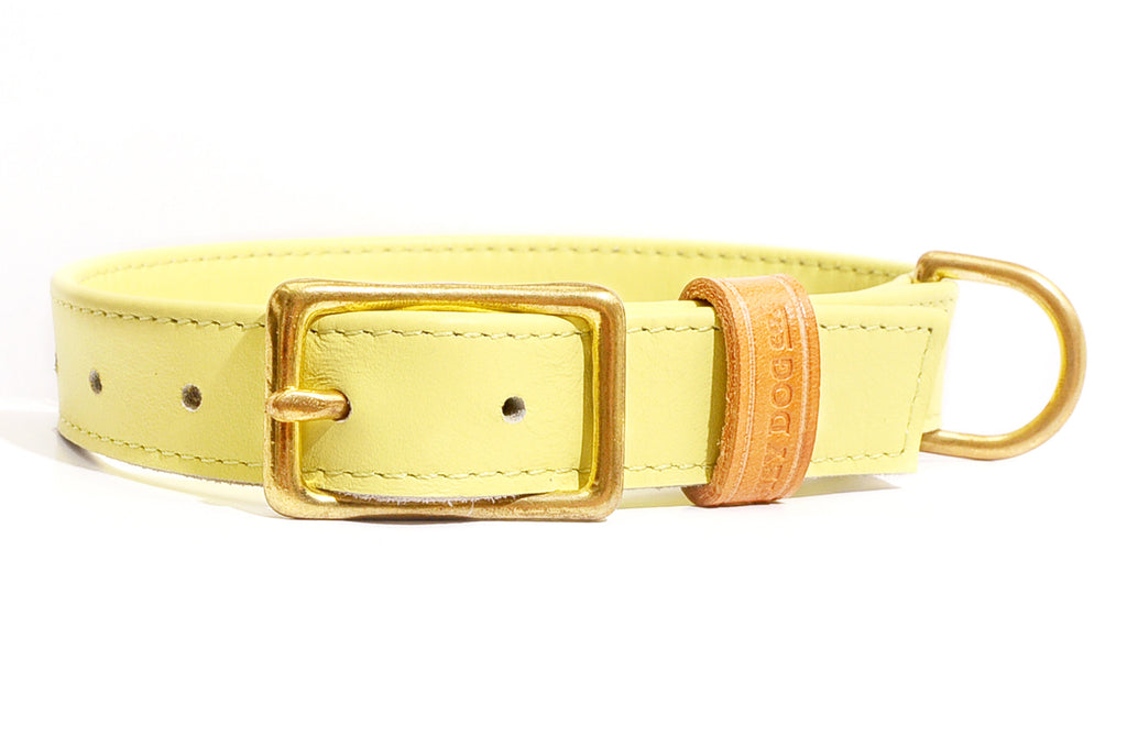 HEY DOG Co. | Canary Bon Bon Collar
