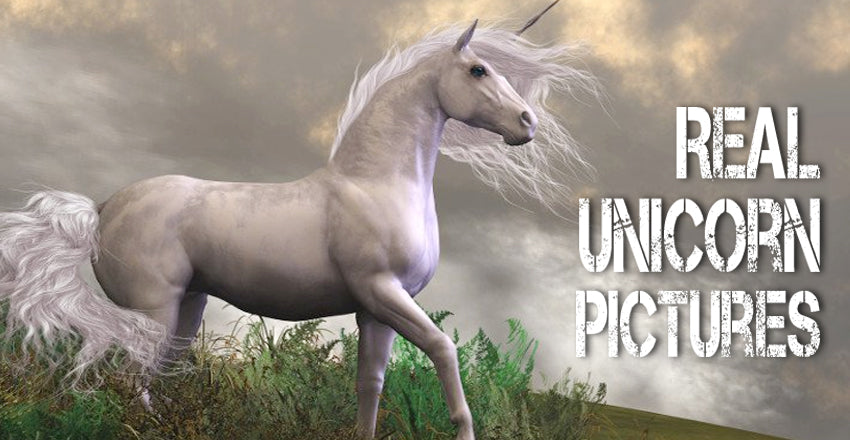 Real Unicorn Pictures: A Visual Collection of Unicorn Through History