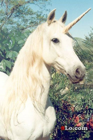 real unicorn pictures