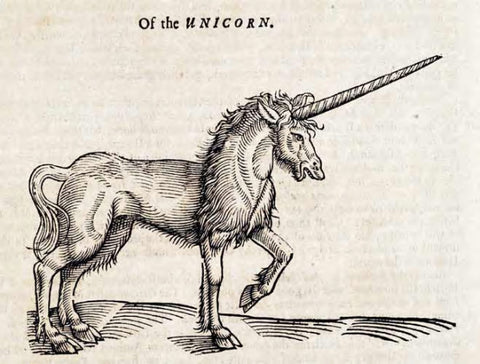 fun unicorn facts