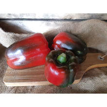 Capsicum (Green/red) Assorted sizes - Organic