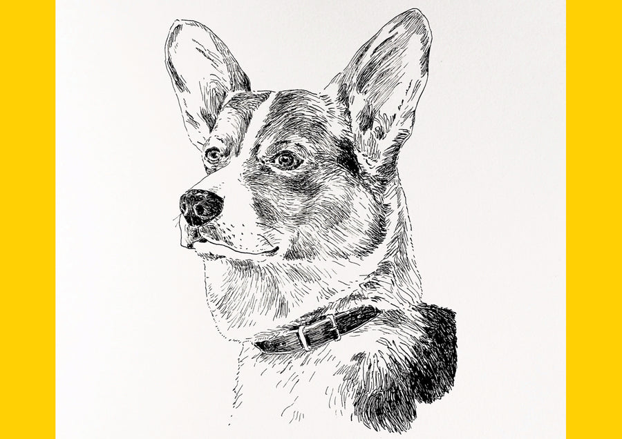 Morus Monthly: Drawing Dogs with Tom Bingham