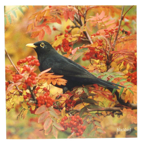 RSPB - Sound Card - Blackbird