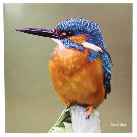 RSPB - Sound Card - Kingfisher