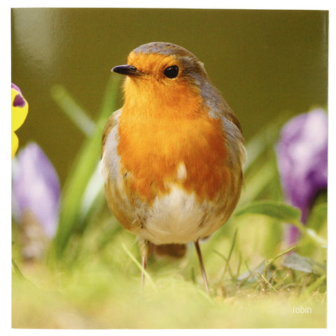 RSPB - Sound Card - Robin
