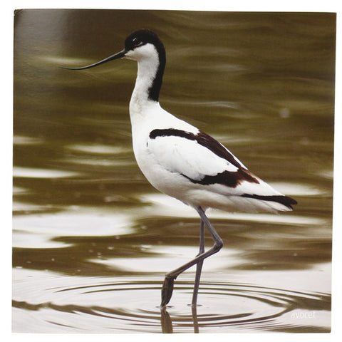 RSPB - Sound Card - Avocet