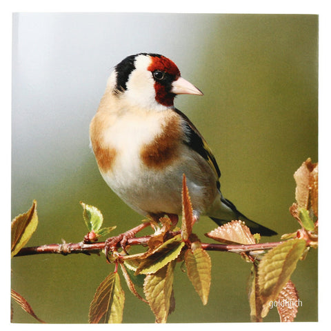 RSPB - Sound Card - Goldfinch
