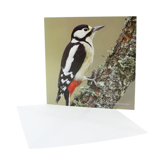 RSPB - Sound Card - Great Spotted Woodpecker