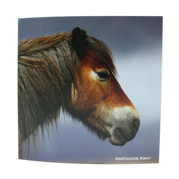 Sound Card - Dartmoor Pony