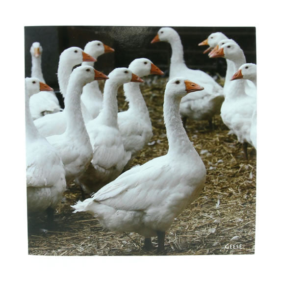 Sound Card - Geese