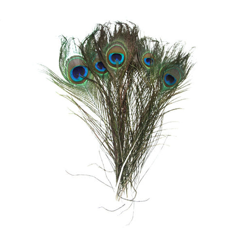 Peacock Feathers Pack of 10