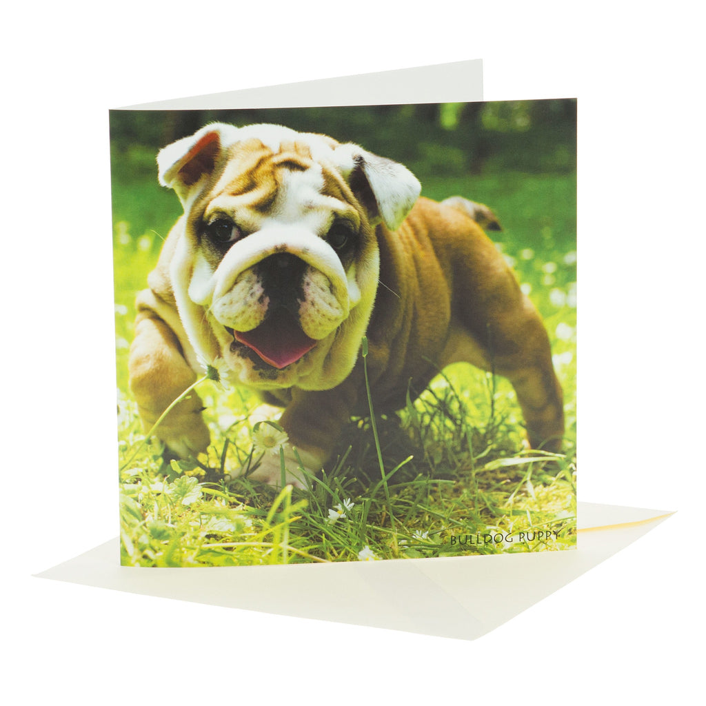 Sound Card - Bulldog Puppy