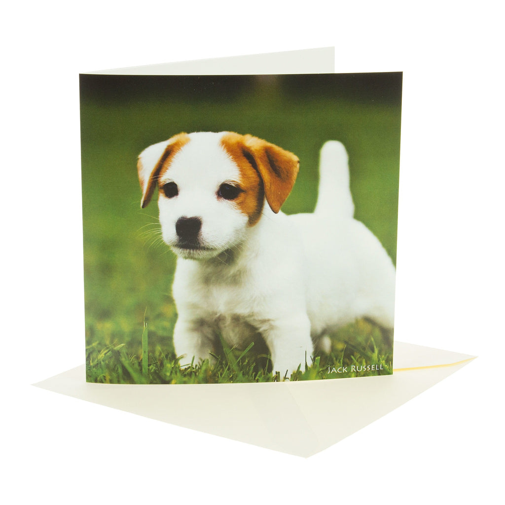 Sound Card - Jack Russell