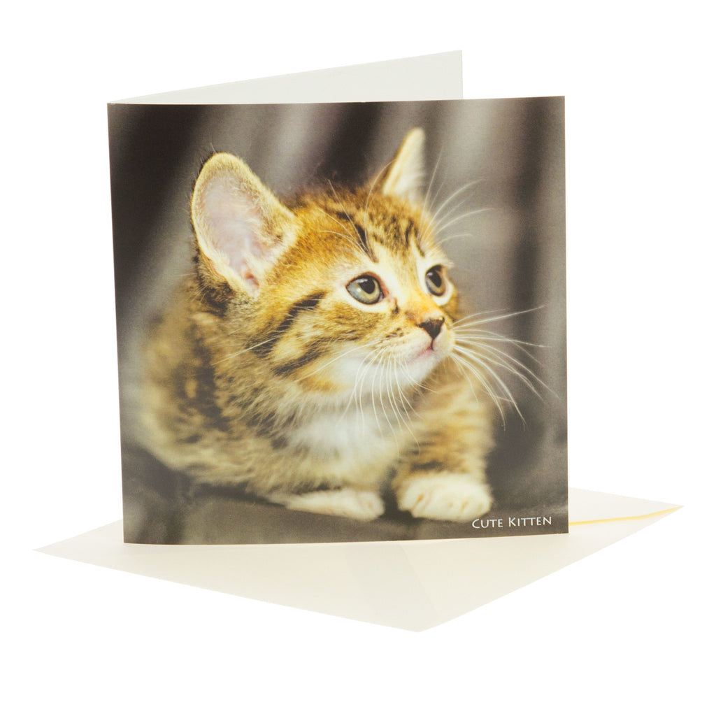 Sound Card - Cute Kitten