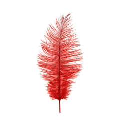 Small Ostrich Feather