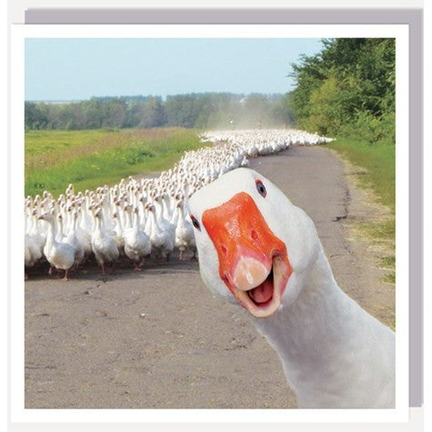 1000 Words Card Goose!